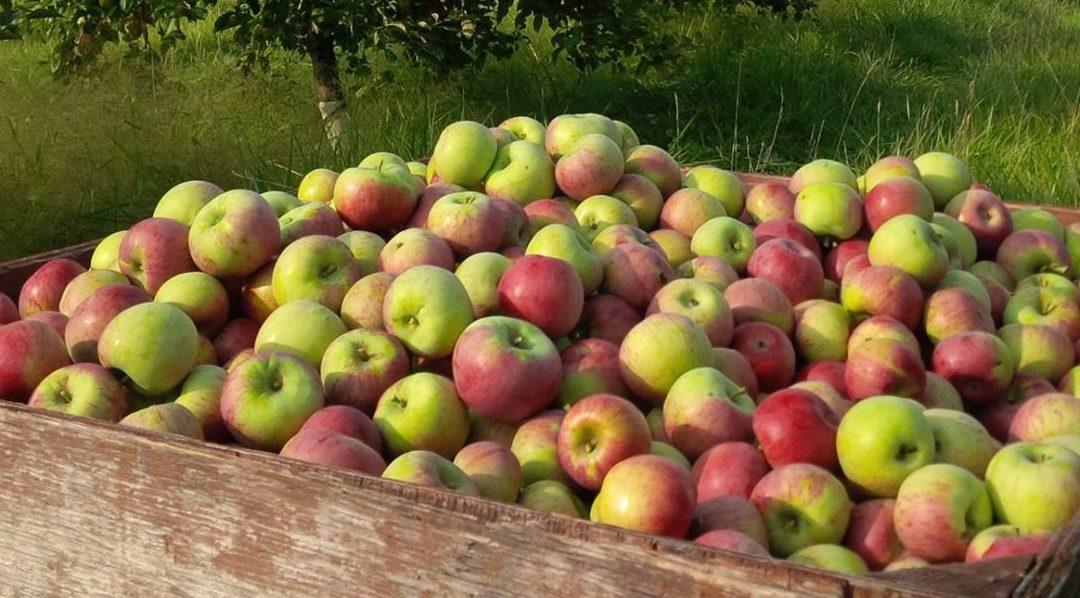 Celebrating the Harvest on Ontario's West Coast