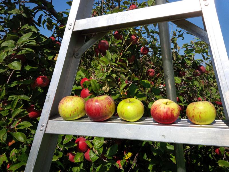 Local Produce Gift Cards (Maitside Orchards) Image